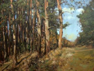 Jan Odehnal - Les, borovice
